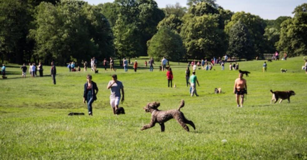Great Dog Parks