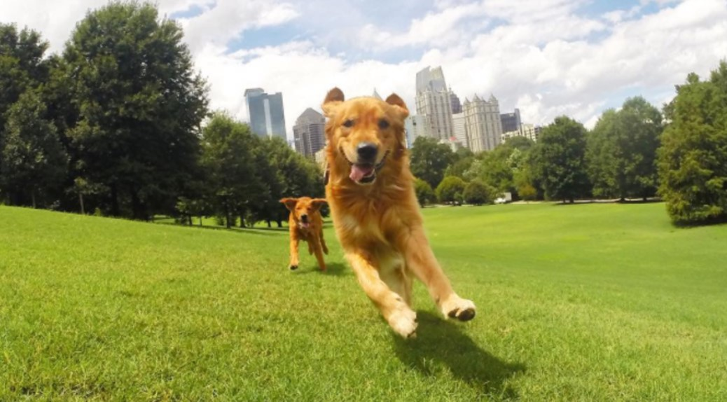 3 Criteria of the Great Dog Parks
