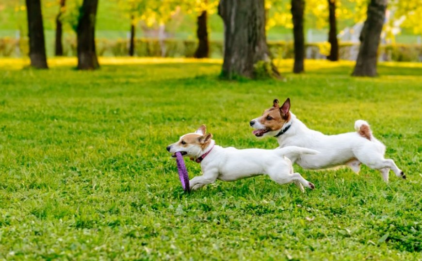 4 Things That You Should Know about Cozy Dog Parks