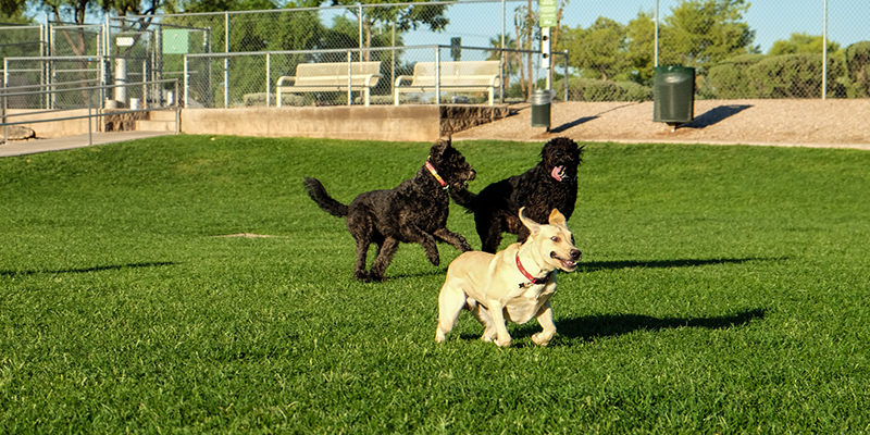 3 Tips to Help Your Dogs Avoiding Problems in the Dog Parks