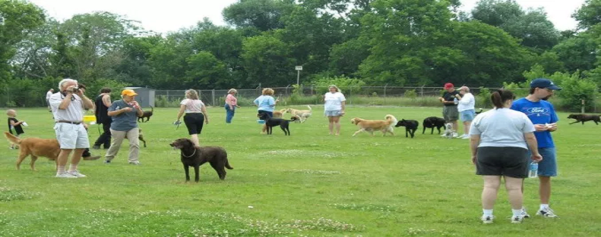 Factors to Consider when Looking for the Best Dog Park