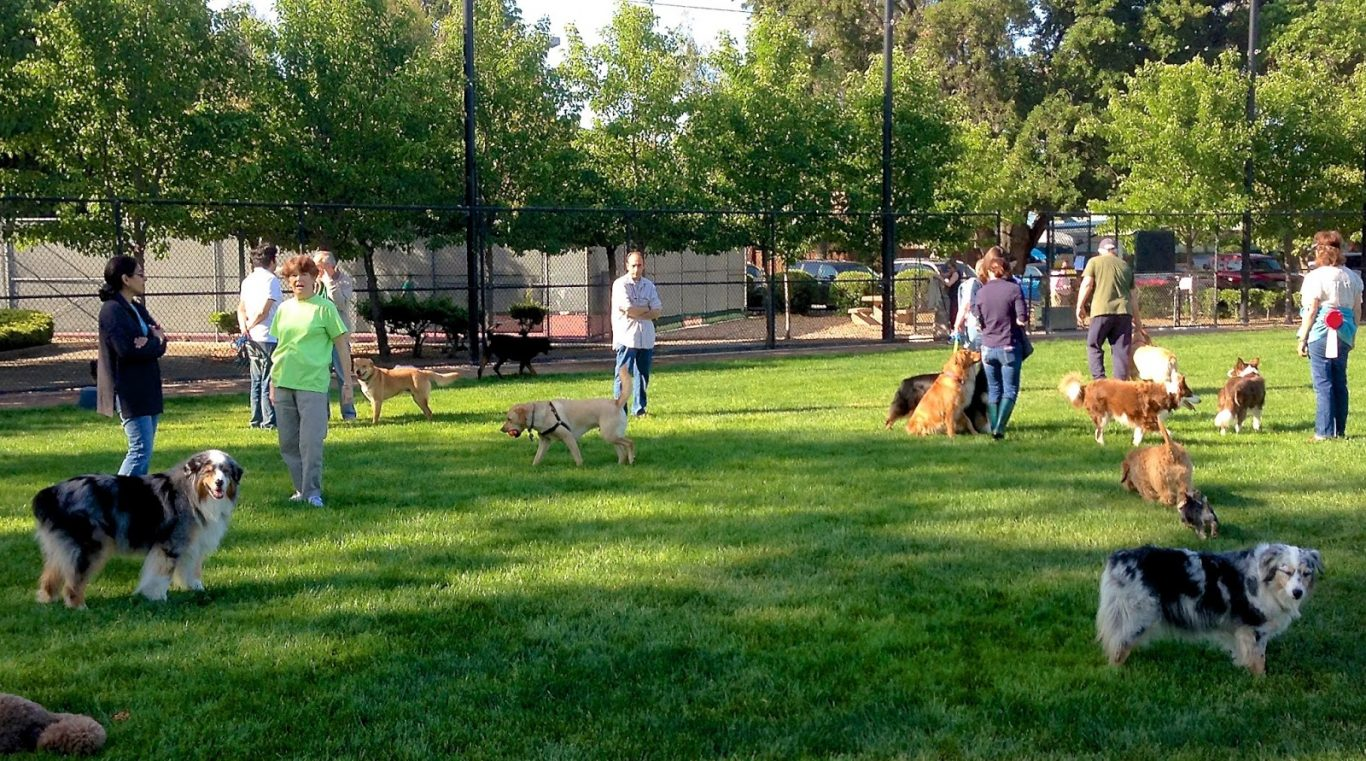 Dog Parks: The Best Playground Place for Your Dogs